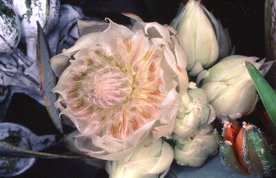 Nobuyoshi Araki, 'Flower Rondeau', 1997/2020