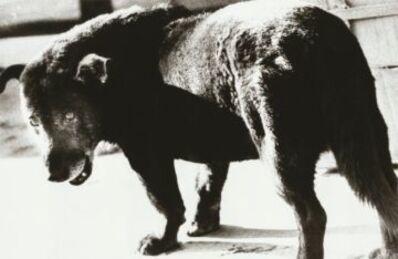 Daido Moriyama, 'untitled', 1971