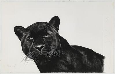Rose Corcoran, 'Black Panther'