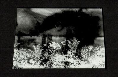 Sakiko Nomura, 'Untitled ', 2019