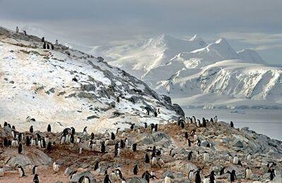Arnold Zageris, 'Gentoo Penguins and Arctowski Peninsula', 2014