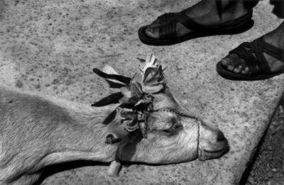 Graciela Iturbide, 'Antes de la matanza (Before the slaughter), La Mixteca, Oaxaca', 1992
