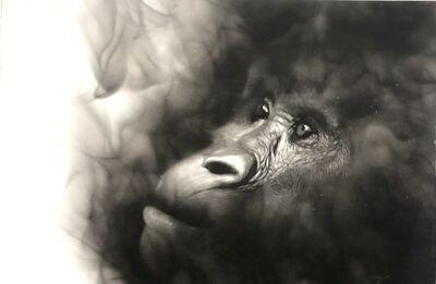 Steven Spazuk, 'Gorilla Beringie (Eastern Gorilla)', 2021