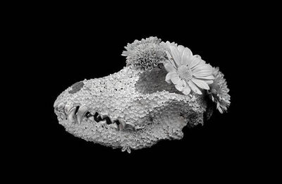 Kengo Takahashi, 'Flower Funeral - Airedale- ', 2018