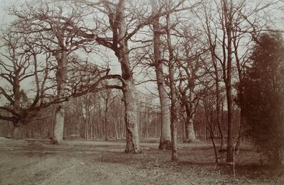 Olympe Aguado, 'Forest Scene, Bois de Boulogne', ca. 1856