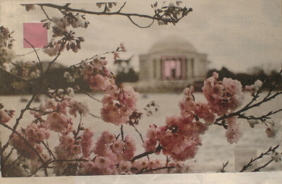 Ken Girardini, 'Cherry Blossoms at the Jefferson Memorial', 2010
