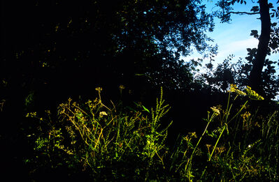 Justin Partyka, 'Weeds in Light, Cowpasture Lane, Suffolk', 2014