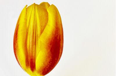 Joel Grey, 'Tulip', ca. 2018