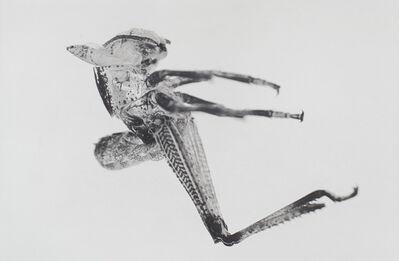 Carsten Höller, 'Puppen', 2013