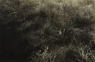 Alfred Stieglitz, 'Grasses', 1933