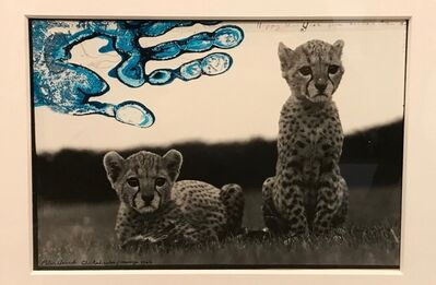 Peter Beard, 'Orphaned Cheetah Cubs, Mweiga National Park, Kenya, for The End of the Game ', 1962