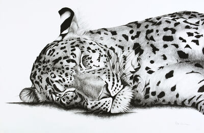 Rose Corcoran, '9. Sleeping Leopard', 2018