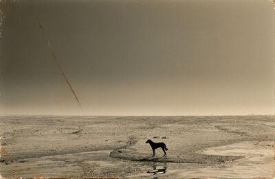 Yamamoto Masao, '#4,  (dog on river)', 1993