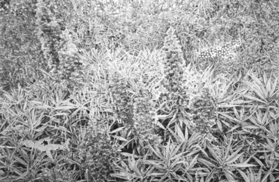 Hugo Bastidas, 'Undergrowth', 2017