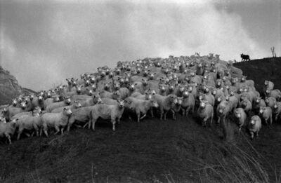 Armando Arorizo, 'Herding on Owhango,', 2001