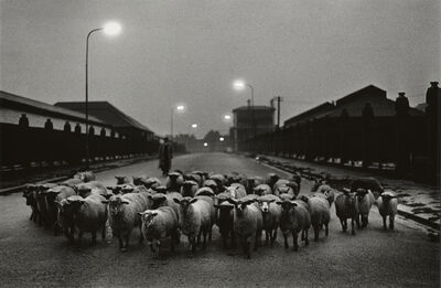 Don McCullin, 'Sheep going to the Slaughter, Early Morning, Near the Caledonian Road, London', 1965