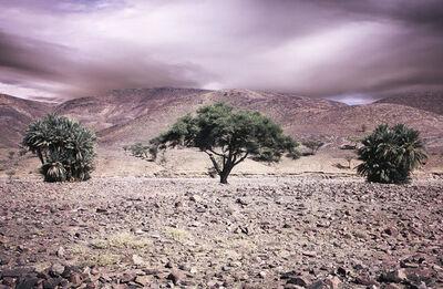 Bernhard Quade, 'Morocco Atlas Three Trees', 2011