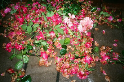 Sarah Liss, 'Rose Petals Fall with Tears in My Eyes', ca. 2019-2020