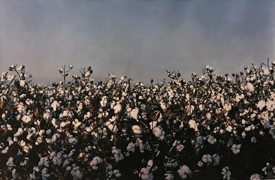 William Eggleston, 'Untitled (view of cotton horizon)', 1992