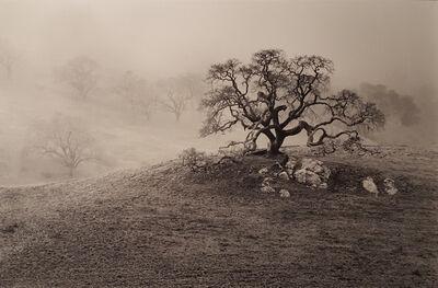 Paul Kozal, 'California Oak', 2003