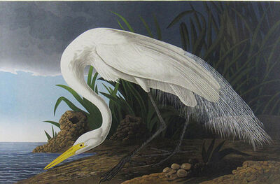 John James Audubon, 'Great Egret', ca. 1987