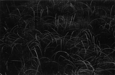 Harry Callahan, 'Grasses, Wisconsin', 1958