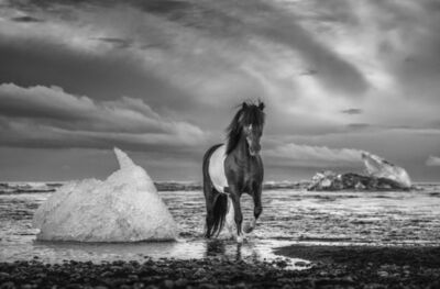 David Yarrow, 'On the Rocks', 2020