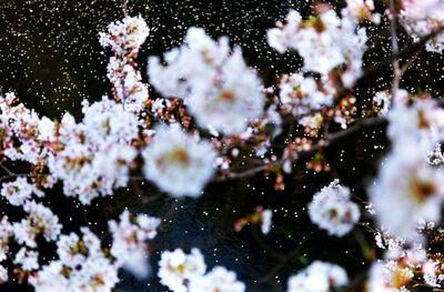 Mika Ninagawa, 'Acid Bloom', 2003
