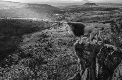 David Yarrow, 'King of Kings', ca. 2019