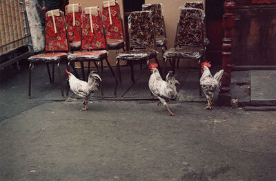 Helen Levitt, 'Untitled (Three Rosters), New York City, New York', 1971
