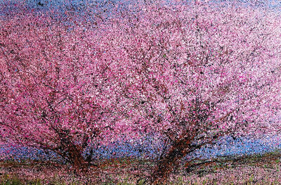 Diana Carey, 'Twin Cherries', 2018
