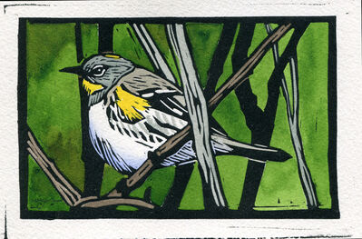 Sherrie York, 'Yellow-rumped Warbler (bitty bird)', 2019