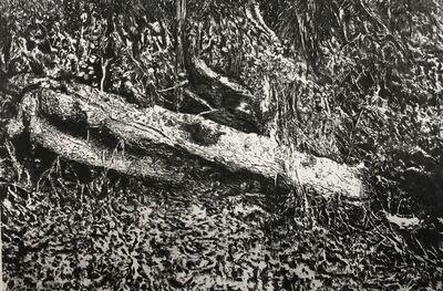 Ana Gallardo, 'Sin título (Serie: Bocetos para la construcción de un paisaje. Laguna de Zempoala)', 2015