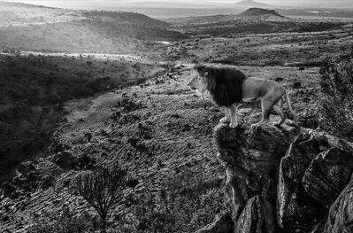 David Yarrow, 'King Of Kings', 2019