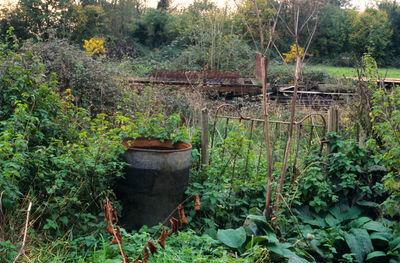 Justin Partyka, 'Garden, Walnut Tree Farm, Suffolk', 2006