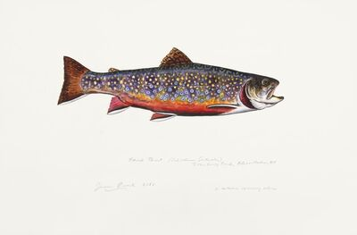 James Prosek, 'Brook Trout in Autumn Spawning Colors', 2018