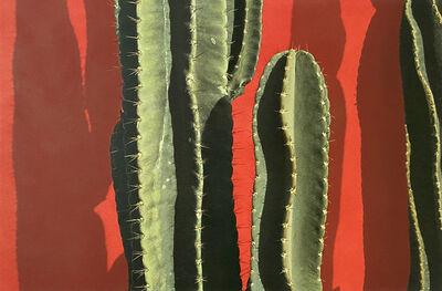 Alice Steinhardt, 'Cactus', 1981