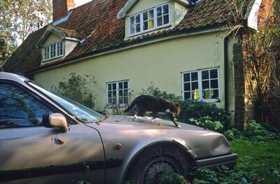 Justin Partyka, 'Citroën CX Safari and Cat, Walnut Tree Farm, Suffolk', 2006