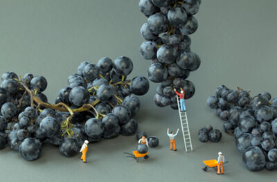 Christopher Boffoli, 'Grape Harvest ', 2012