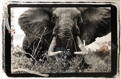 Peter Beard, 'Large Tusker, 150-160 lber', 1965