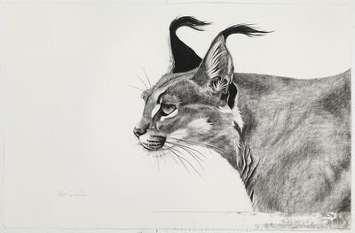 Rose Corcoran, 'Caracal in the Wind'