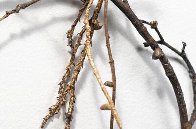 Carol Saft, 'Twigs 4', 2019