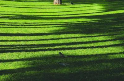 Abbas Kiarostami, 'Trees & Crows 46', 2007