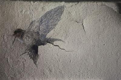 Sung Sangeun, 'Swallow', 2013