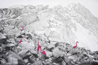 Phillip Adams, 'Flamingos', 2014