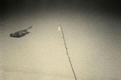 Yamamoto Masao, 'Untitled #1610', 2011
