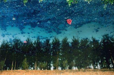 Han Bing (b. 1974), 'Grove', 2011
