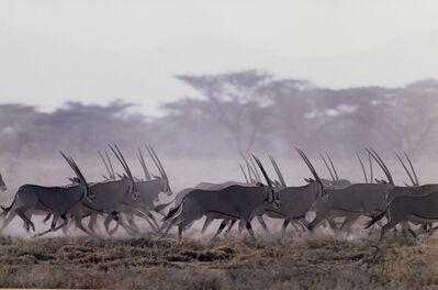 John Dominis, 'Gazelle'