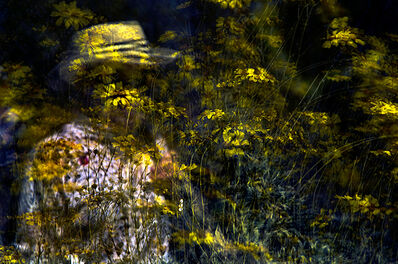 Darryll Schiff, 'Yellow', 2015