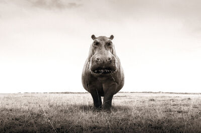 Graeme Purdy, 'One Hippo', 2019